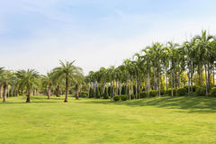 Green grass field with palm tree in public park Royalty Free Stock Images
