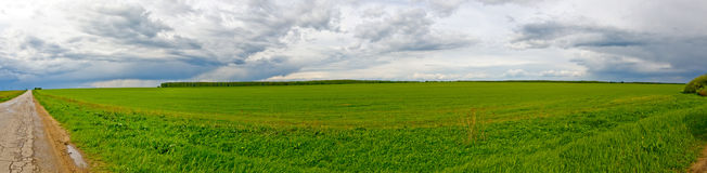 Green grass field panorama. Overcast, rainy weather. Forest in background. Country road Royalty Free Stock Photo