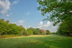 Green grass field in park Stock Photography