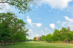Green grass field in park Royalty Free Stock Image