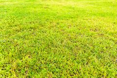 Green Grass Field in a Park Could Give Visitors Fresh Feeling stock photo