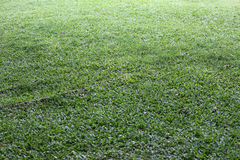 Green grass field and perspective to copy space for multi purpos Royalty Free Stock Photography