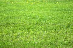 Green grass in a field Royalty Free Stock Photos
