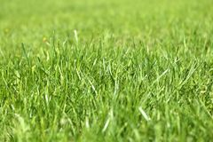 Green grass in a field Stock Images