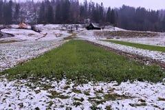 Green grass field on a rainy day. Autumn day, slovenia Stock Image