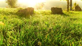 Green grass field. Sunshine morning Royalty Free Stock Images