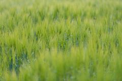 Green grass field in Scandinavia, Norway. Stock Photo