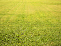 Green grass field. Seamless background texture Royalty Free Stock Photo