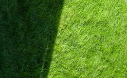 Green grass field with shadow and sunny zone Stock Photography
