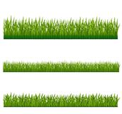 GREEN GRASS. Field sky texture Stock Photography