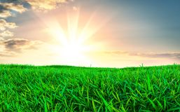 Green grass field on small hills Stock Photo