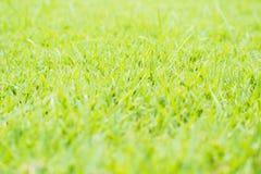 Green grass field in soft sun shine Stock Photography