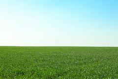 Green grass field, space for text royalty free stock photo