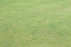 Green grass field of sport playing Stock Photos