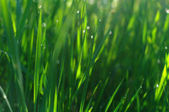 Green grass field suitable for backgrounds or wallpapers Stock Photos