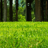 Green Grass Field. Summer Vacation Concept. Fresh Grass Lawn Royalty Free Stock Photo