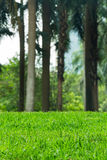Green Grass Field. Summer Vacation Concept. Fresh Grass Lawn Royalty Free Stock Photography