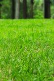 Green Grass Field. Summer Vacation Concept. Fresh Grass Lawn Royalty Free Stock Photos