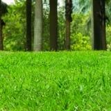 Green Grass Field. Summer Vacation Concept. Fresh Grass Lawn Stock Photos