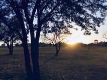 Green Grass Field during Sun Set Stock Photography