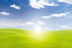 Green grass field and sunset Royalty Free Stock Image