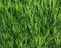 Green grass field texture Stock Photo