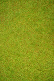 Green grass field texture background. Stock Images
