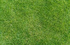 Green grass field texture background for kids playground etc. Green grass field texture background for kids playground golf course soccer or sports Royalty Free Stock Images