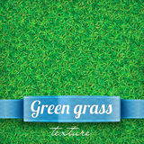 Green grass field texture. D background Royalty Free Stock Photos