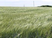 Green grass. Field to the horizon Royalty Free Stock Photos