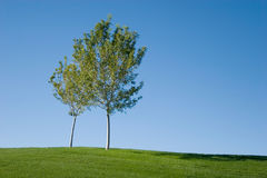 Green grass field and tree Stock Image