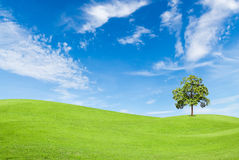 Green grass field with tree and blue sky Stock Photo