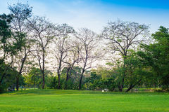 Green grass field and tree in city park Stock Images