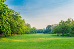 Green grass field and tree in city park. Beautiful avenue in the park Stock Photography