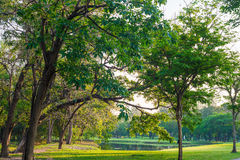 Green grass field and tree in city park. Beautiful avenue in the park Royalty Free Stock Image