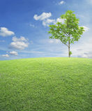 Green grass field with tree over blue sky Stock Images