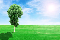 Green grass field and tree with sun and sky Stock Image