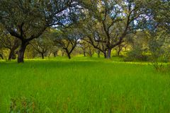 Green grass field with trees in the background. Peaceful forest Royalty Free Stock Photo