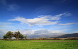 Green Grass Field with Trees on Deep Blue Sky Stock Images