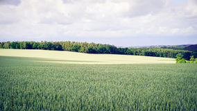Green Grass Field With Trees in the Distance Royalty Free Stock Images