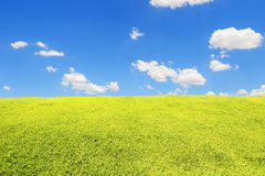 Green grass field under blue sky Stock Photography
