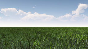 Green grass field under blue sky Stock Images