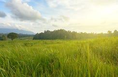 Green grass field under rim light. Stock Photography