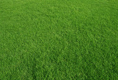 Green grass field use as nature background Stock Image