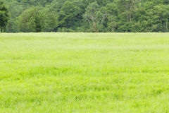 Green grass field and various trees Royalty Free Stock Image