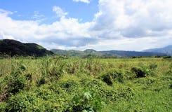 Green grass field in Venezuela Royalty Free Stock Image