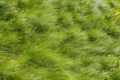 Green grass on the field wave Royalty Free Stock Photo