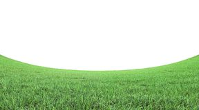 Green grass field on white background 3D rendering