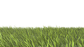 Green grass field with with white background Royalty Free Stock Image