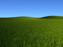 Green grass fields Royalty Free Stock Photos